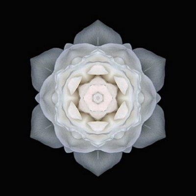 poderes unidos - Mandala floral_02