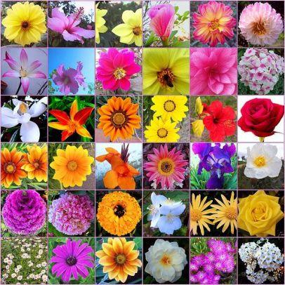 Poderes Unidos - Flores de Bach_01